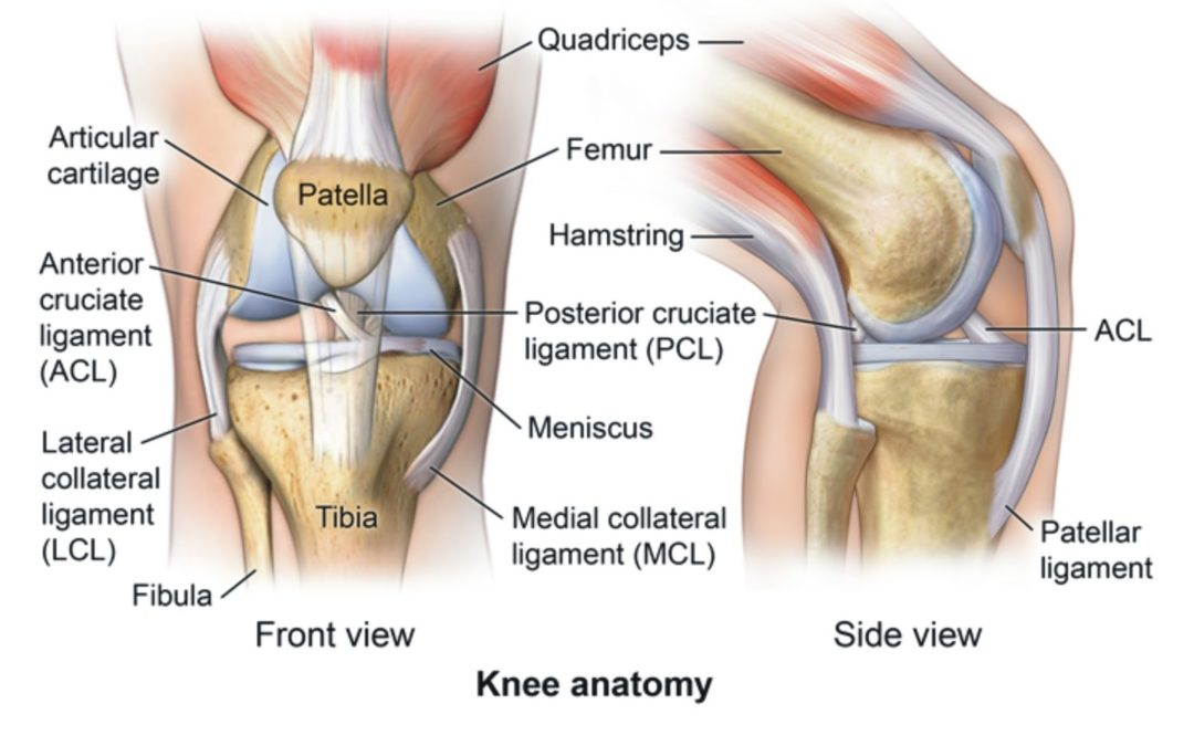 ligament injuries to the knee